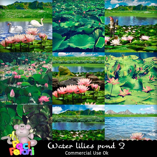 Water lilies pond 2