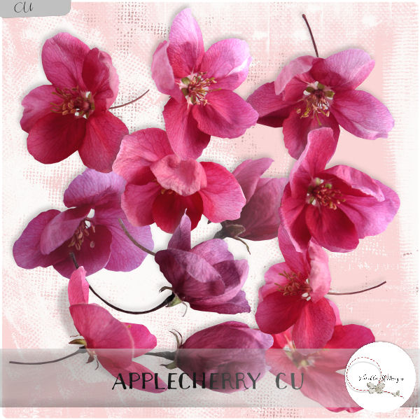 Applecherry flowers CU